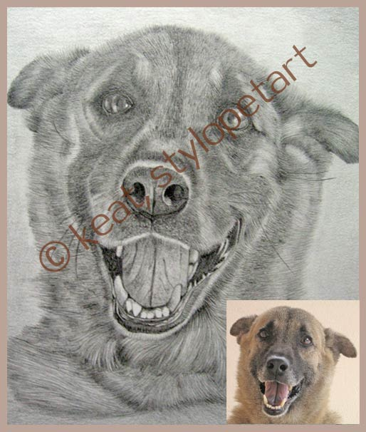 graphite pencil drawings of pet portraits