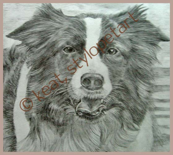 graphite pencil drawings by stylo pet art