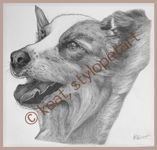 graphic pencil drawing - collie